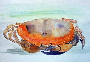 brest2016  crabe